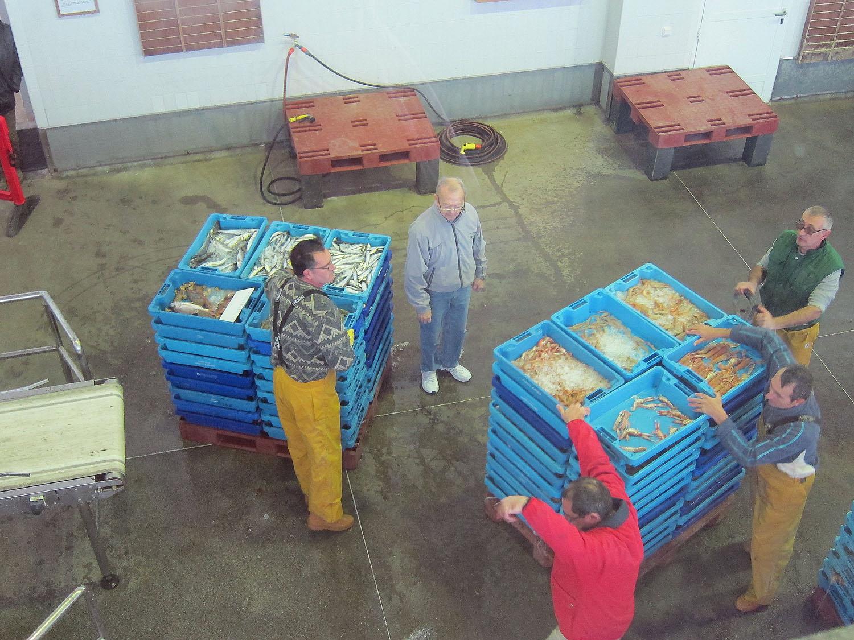 Fiskene er klar til auktion i Denia